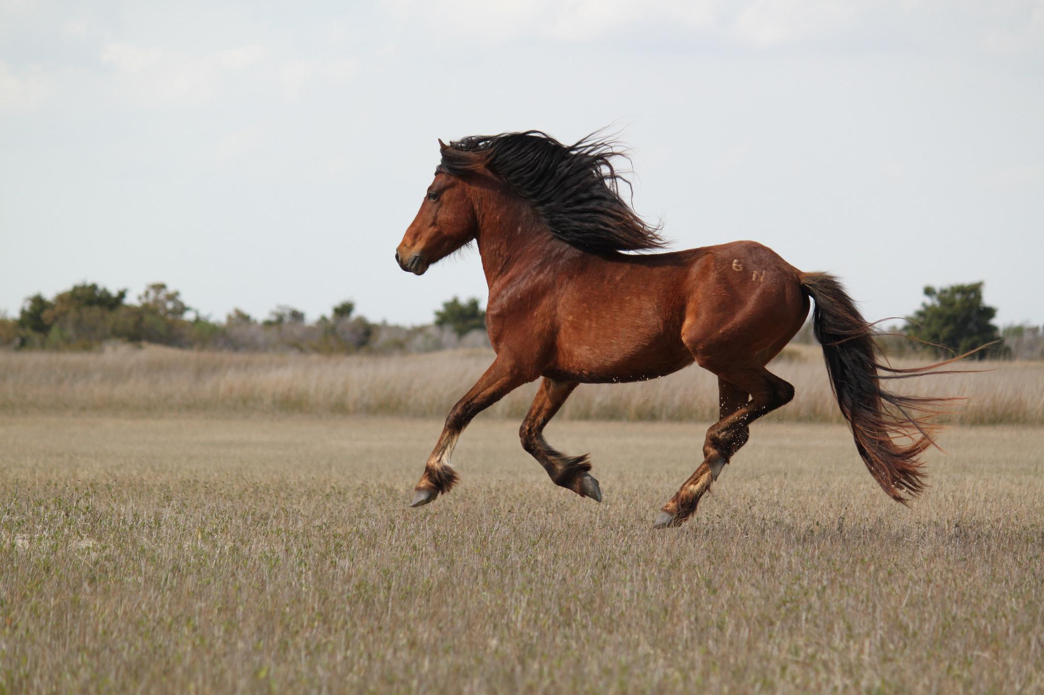 Koń jaki jest konsument widzi – odpowiedzialność przedsiębiorcy za wady zwierząt
